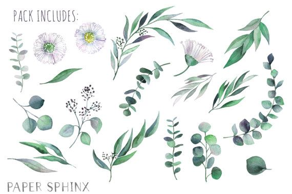 Watercolor Eucalyptus Clipart Greenery Flowers