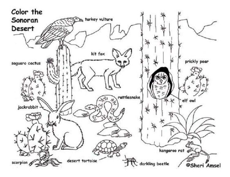 Desert Animal Coloring Pages Desert Animals Coloring Desert Animals Animal Coloring Pages