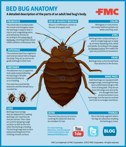 Bed Bug Anatomy Infographic Fmc Pest Wire Bed Bugs Bed Bug Bites Bed Bug Facts