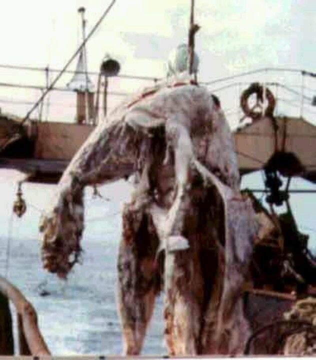 Unexplained Creature is a decomposing whale or similar creature.
