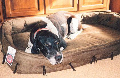 Better Beds For Gun Dogs