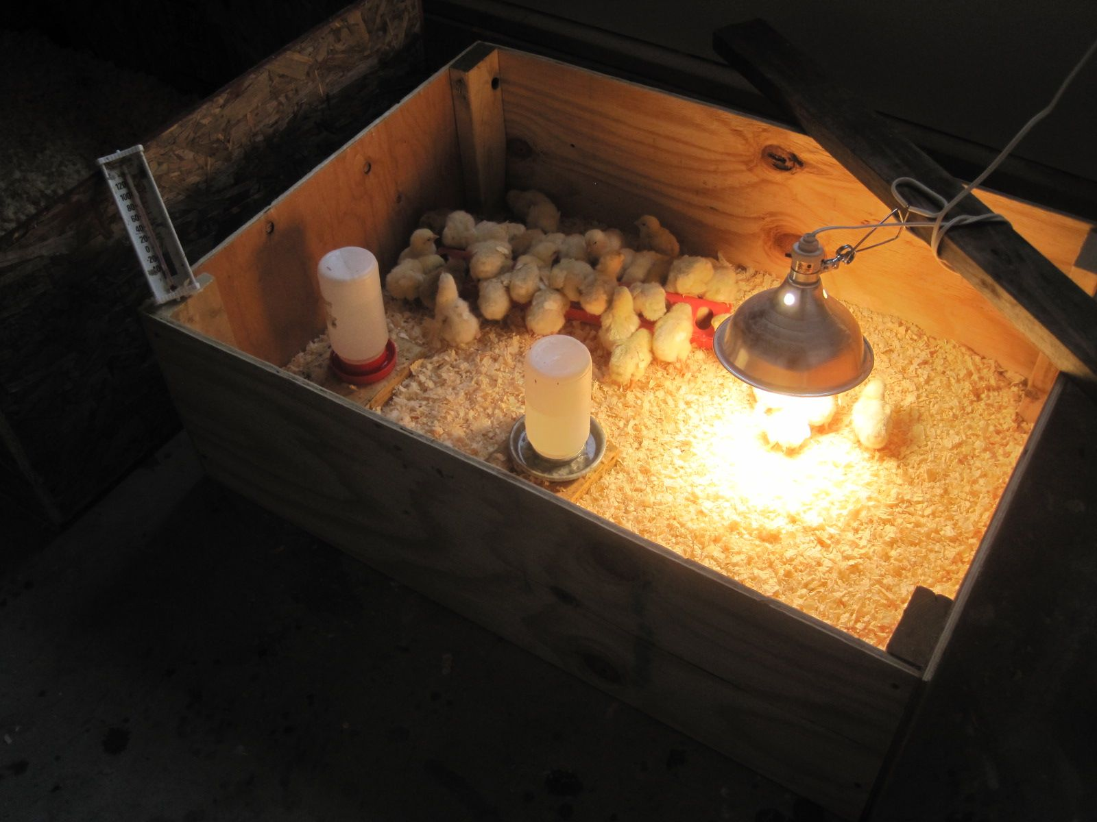 Charmant Diy Chicken Brooder Box