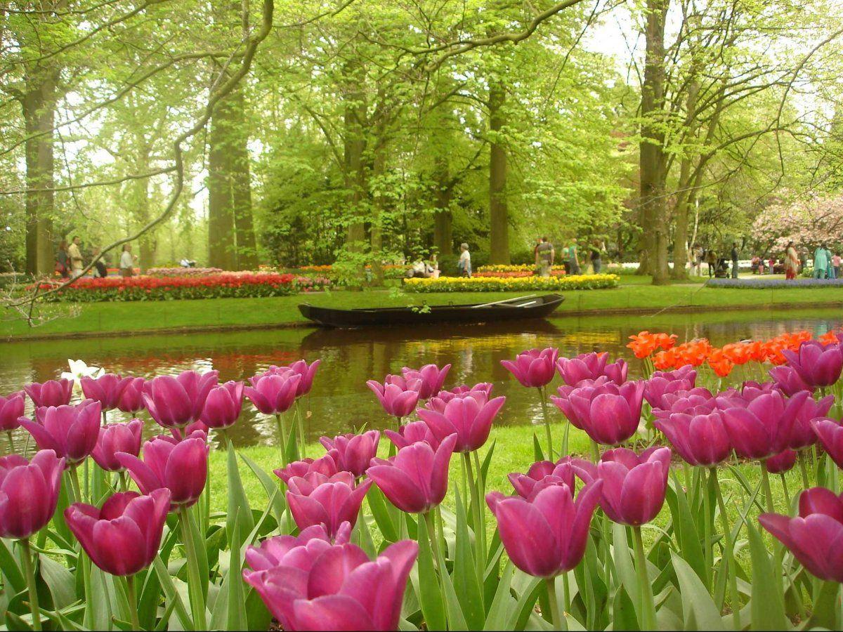 bf4842afdabde954ddab6bce925db046 - Keukenhof Gardens Transportation And Skip The Line Ticket From Amsterdam