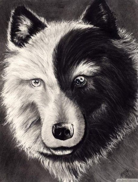 Inspiring For A Tattoo Yin Yang Tattoos Wolf Tattoos Yin Yang Wolf
