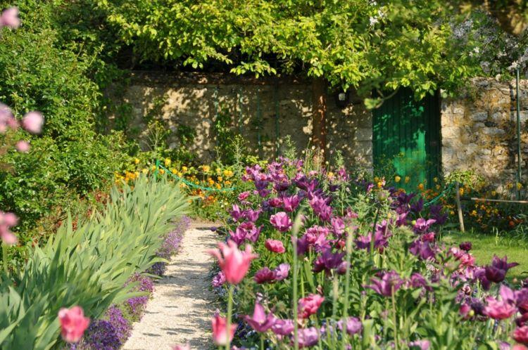 garten gestalten farben-tulpen-lila-mauer-rustikal-graeser - garten mit grasern gestalten