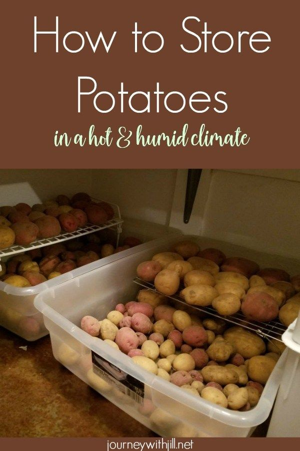 How to Store Potatoes in a Hot and Humid Climate - The Beginner's Garden