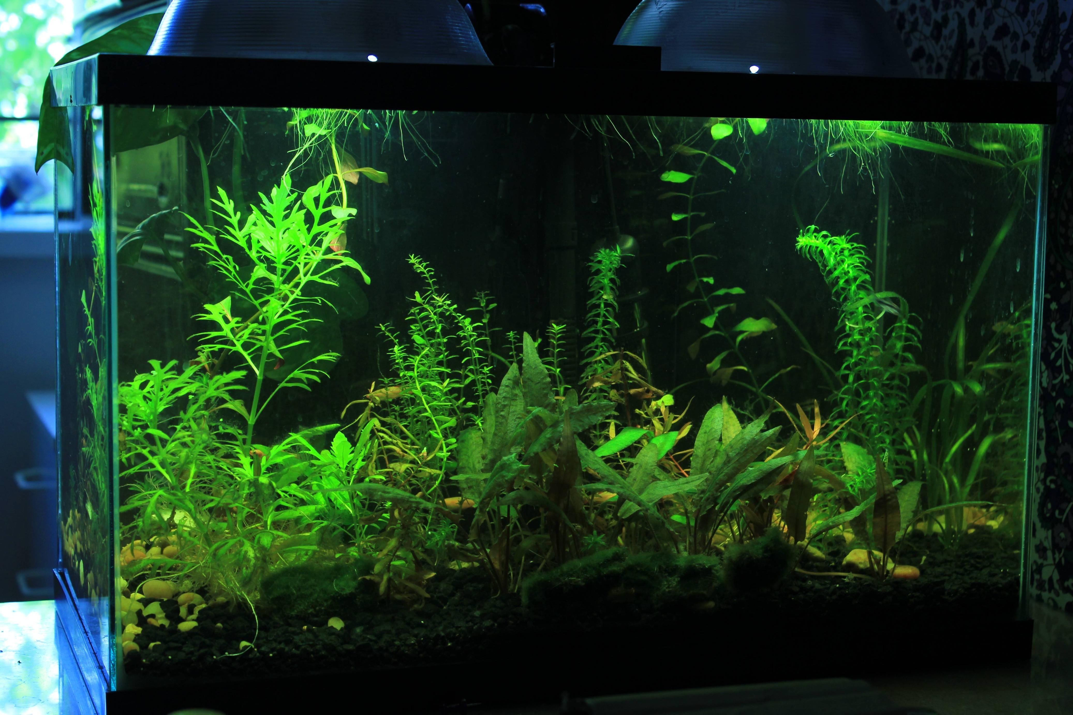 10 Gallon Walstad Style Dirted Tank 10 Gallon Fish Tank Nature Aquarium Fish Tank