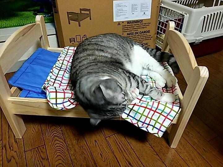 """まんまる on Twitter: """"IKEAの人形ベッド。 猫にぴったりと噂を聞いたのでさくらにプレゼント♪ ほんとに猫ベッドだ(笑) http://t.co/czLhAokRZj"""""""
