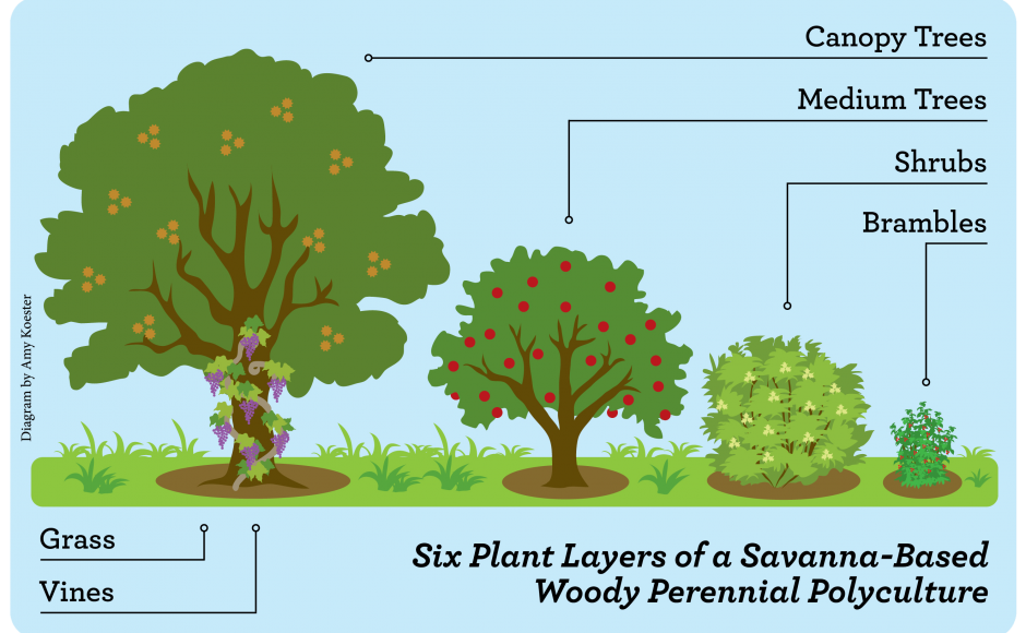 Woody Perennial Polyculture (WPP) Perennials