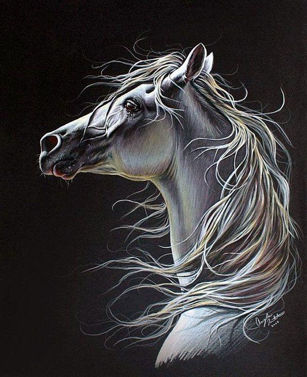40 realistische Tier-Bleistiftzeichnungen – Shirley Prater - Tagliches Pin Blog