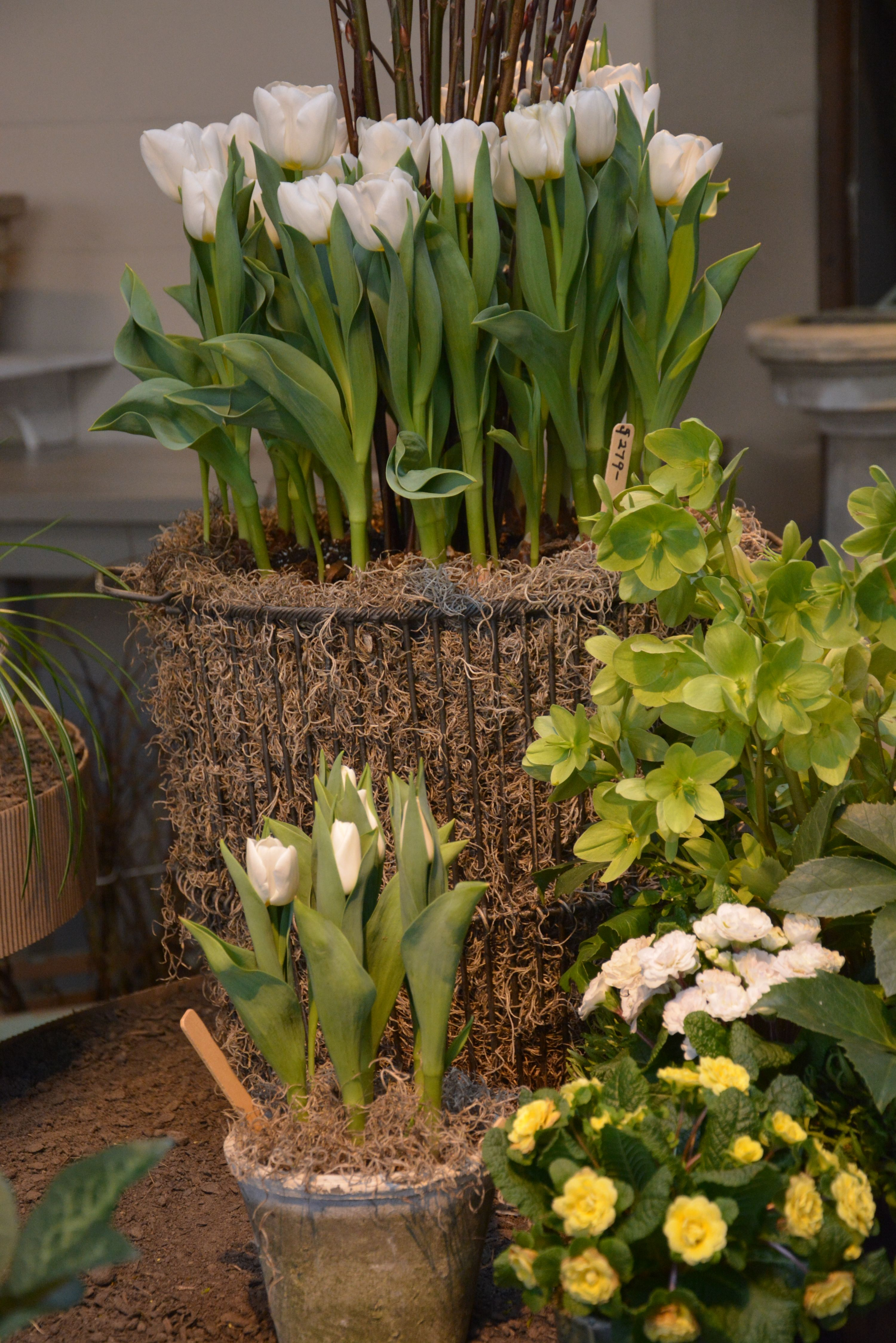 spring containers | Florals | Pinterest | Garden works, Gardens and ...