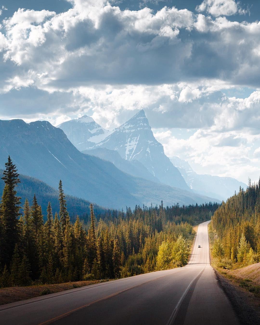 Дорога на природу вертикальная картинка