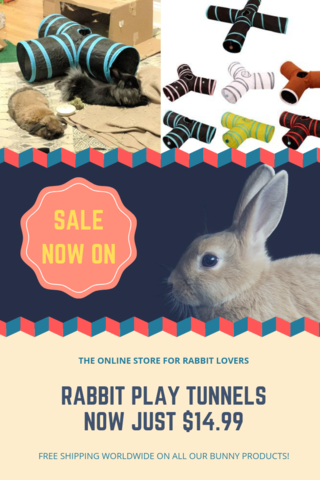 How To Trim A Rabbits Nails Like A Vet Play Tunnel Cute Bunny Pictures Rabbit