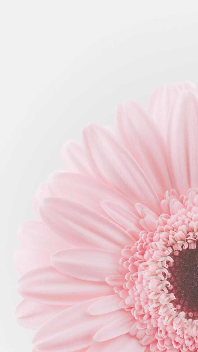 Iphone And Android Wallpapers Beautiful Pastel Flower