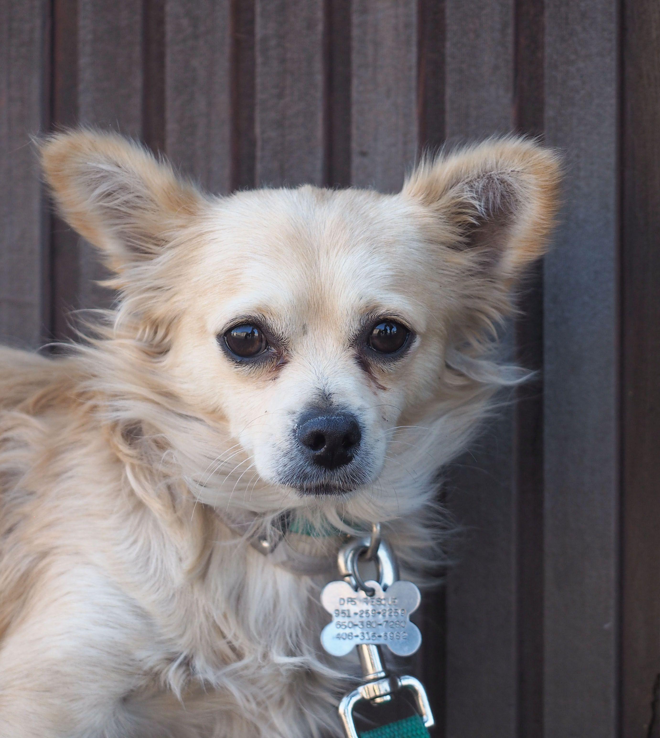 Puppy rescue palo alto