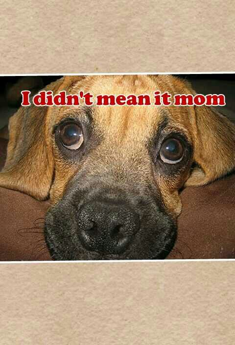 So Naughty But Cute Dogs Dog Cat Pictures Dog Eyes