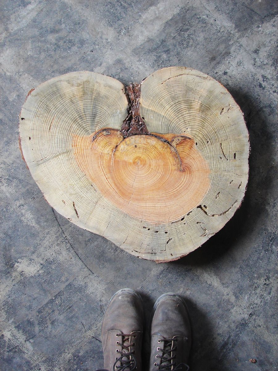 Heart of the tree...literally!