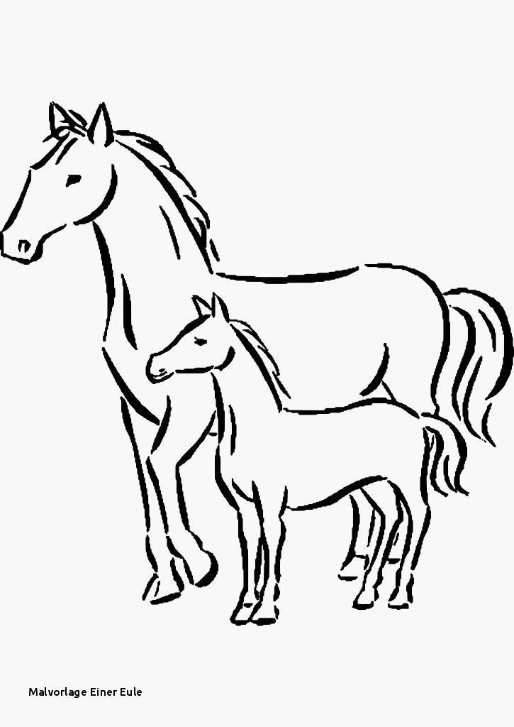 beste von inspiration pferde ausmalbilder zum ausdrucken
