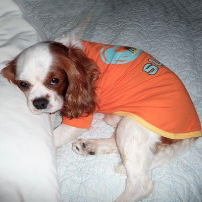 Bless This Little Guy Cavalier Rescue Usa Burt In Ventura Ca
