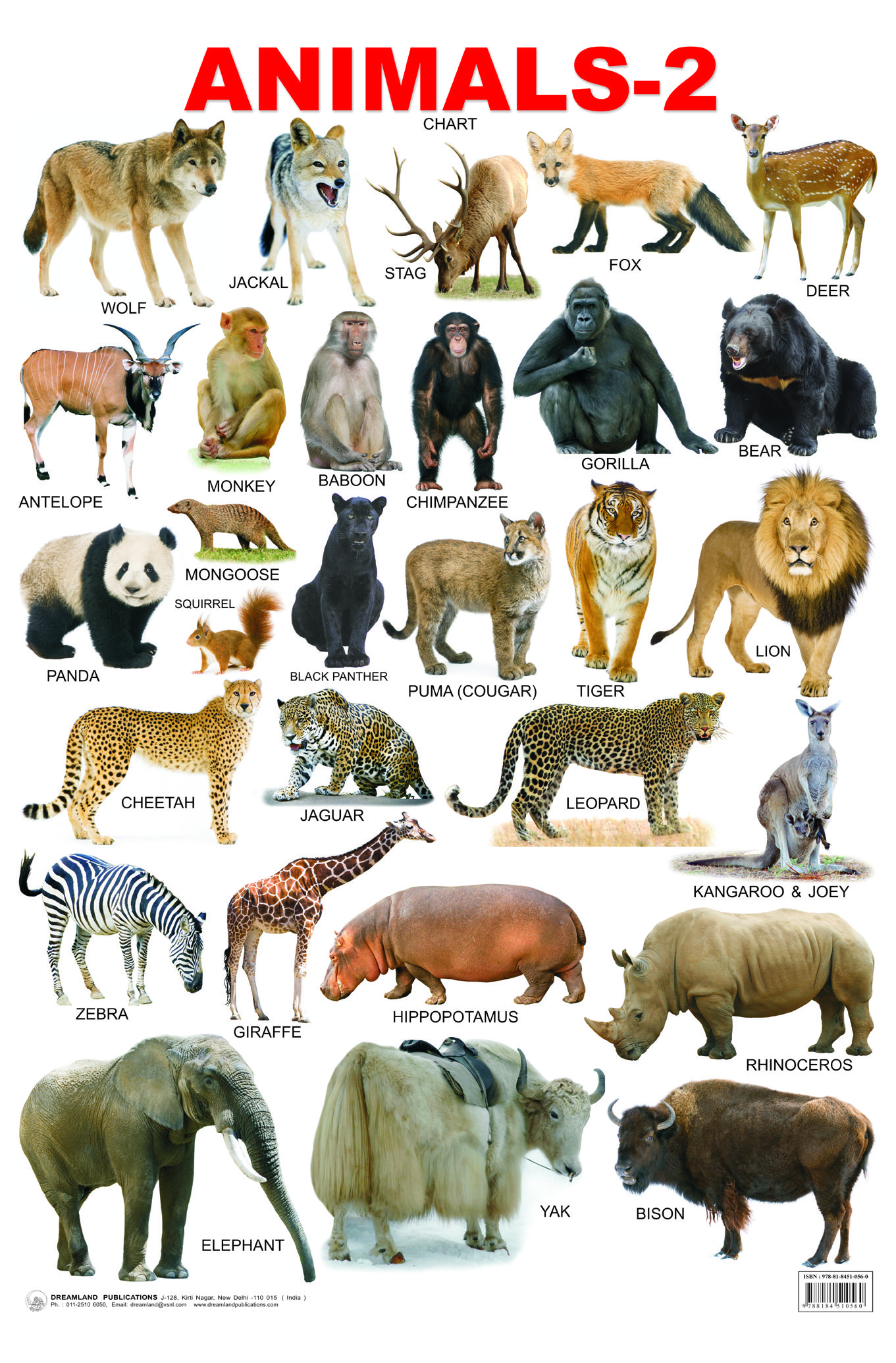 Wild Animals List Of Wild Animal Names In English With