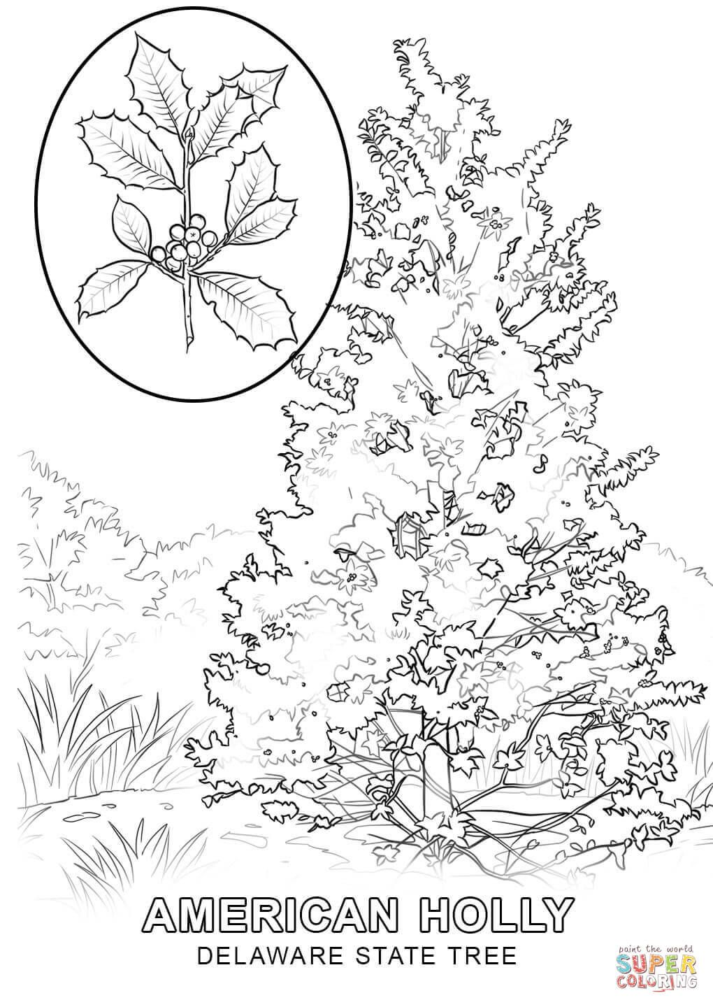 Click The Delaware State Tree Coloring Pages To View Printable Version Or Color It Online