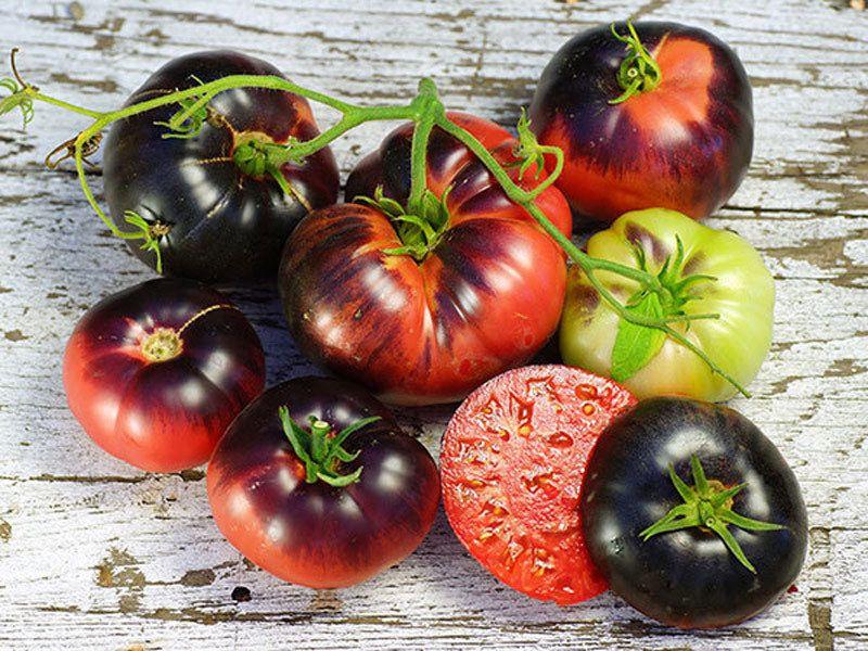 сорта помидоров сибирской селекции