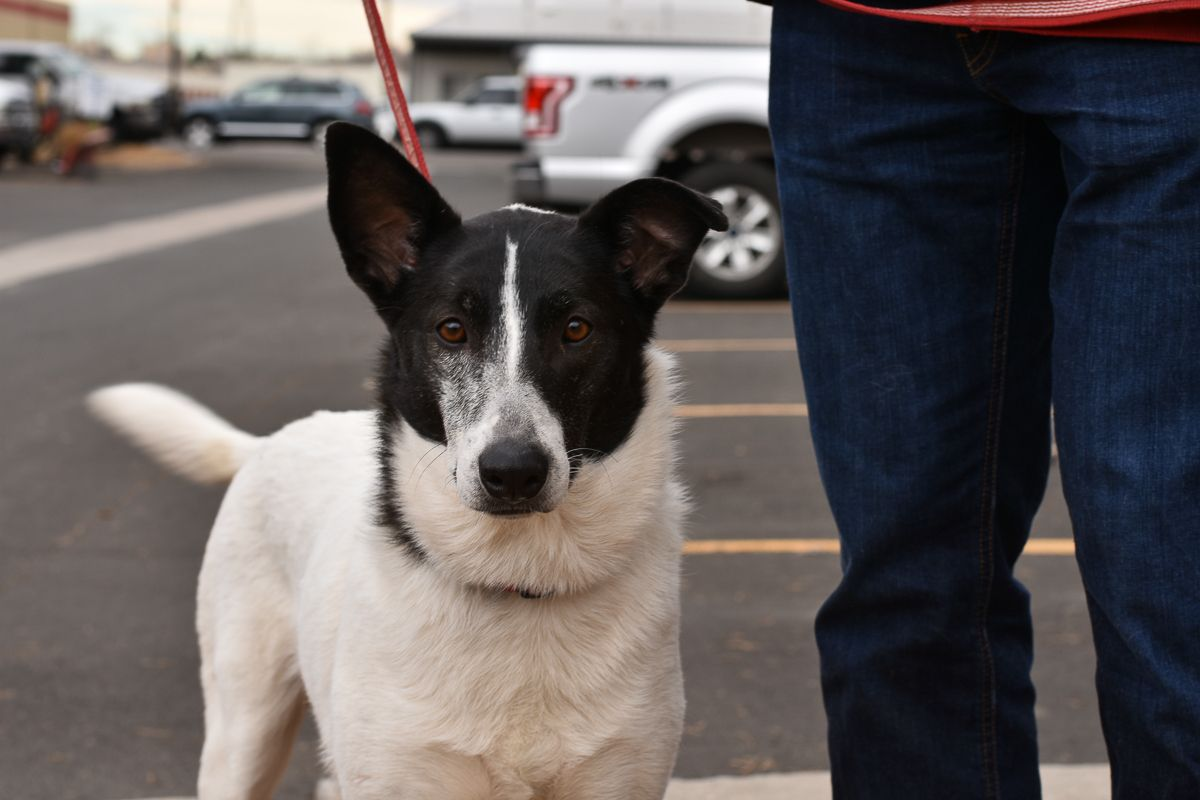 Adopt Biscuit on Dog adoption, Pet adoption, Dogs and