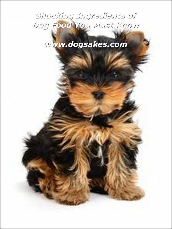 Info's : Dog Food Label - Dog Sakes