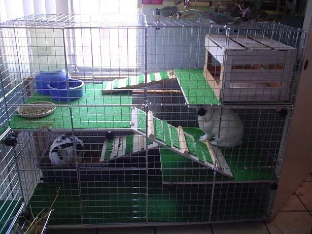 Como hacer casas de conejos buscar con google casas de - Casas para conejos enanos ...