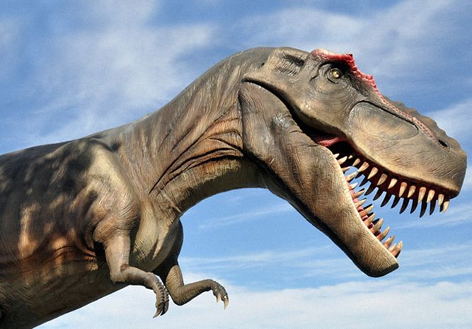 Visit the Mesozoic era. Discover fossil bones and tracks. See palaeontologists collect and study dinosaur fossils. Look out for fierce hunters like tyrannosaurs and giant plant-eating sauropods!