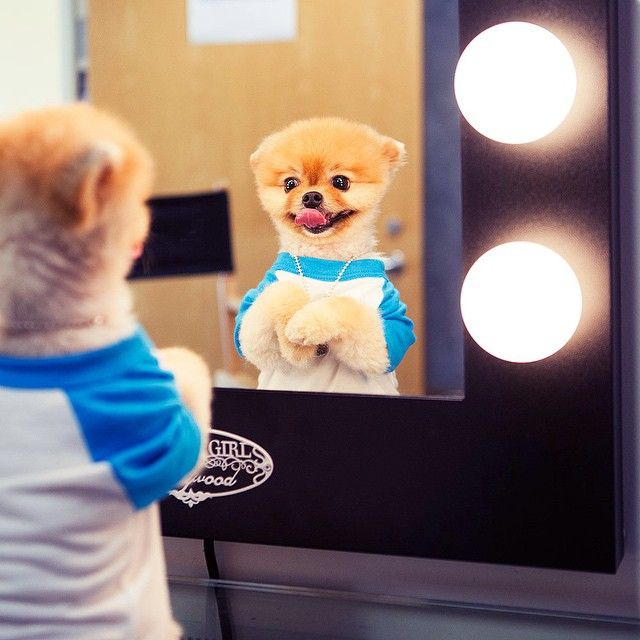 "Jiff Pom I'm ready to go ""jiff your on in 5"" I love my life"