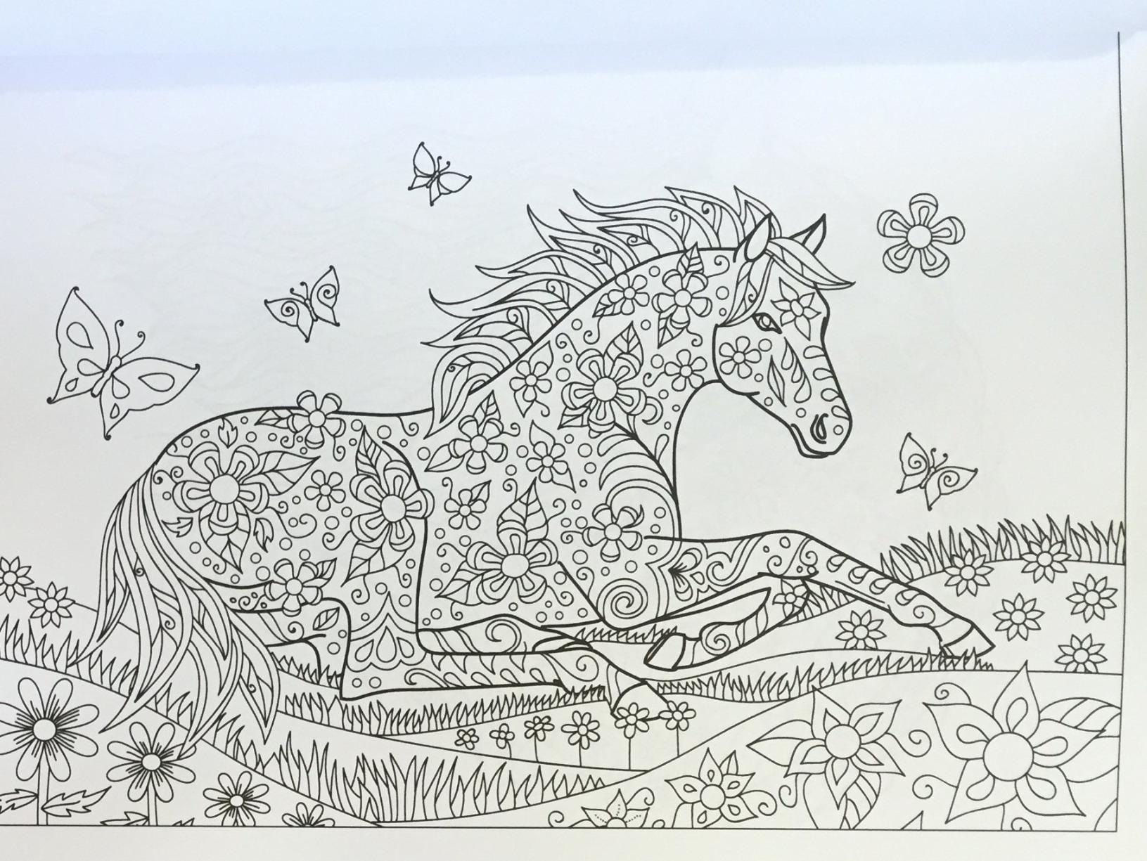 Amazon.com: The Wonderful World of Horses - Horse Adult ...