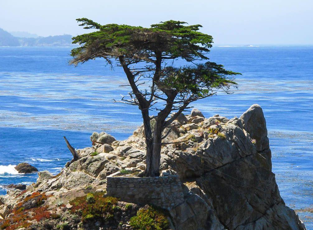 30 Things To Do In Monterey Bay Area California Tripnorthern Californiapebble Beach