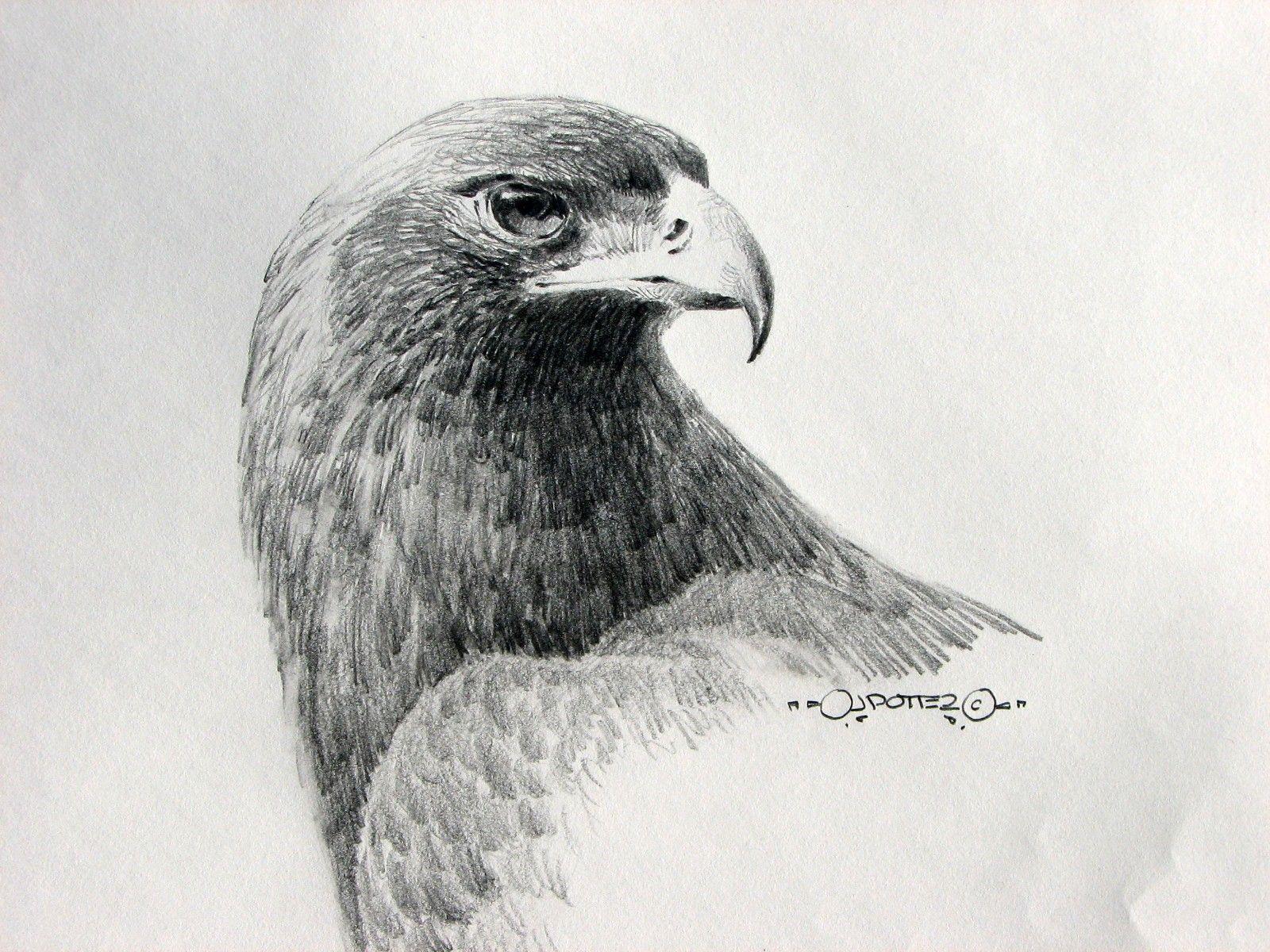 Eyeofthehunter Goldeneagle Jpg 1600 1200 Realistic Animal Drawings Eagle Drawing Eye Drawing