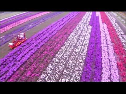 최고의 농업 기계 ✩  농업 수확 기계 ✩ 무거운 농업 장비 ✩ 아름다운 수확의 계절