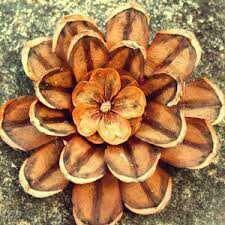 Flower pinecone