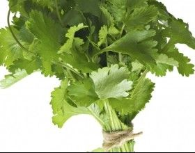 Coriander / Cilantro - anti-inflammatory and helpful for blood sugar control