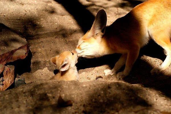 fox cute - Tìm với Google