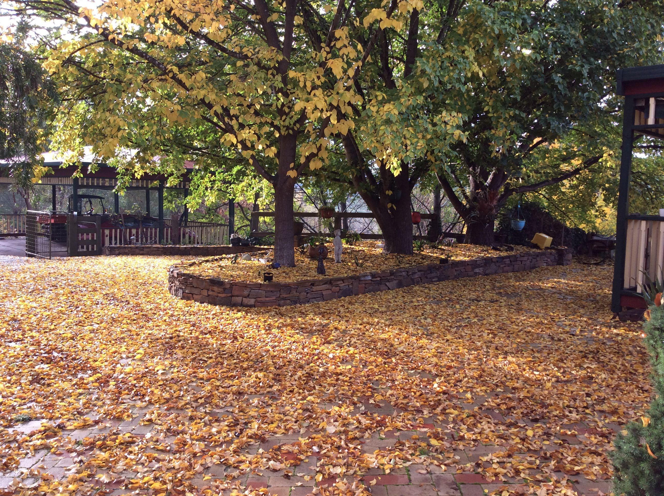 Autumn colours wattlegrovebedandbreakfast