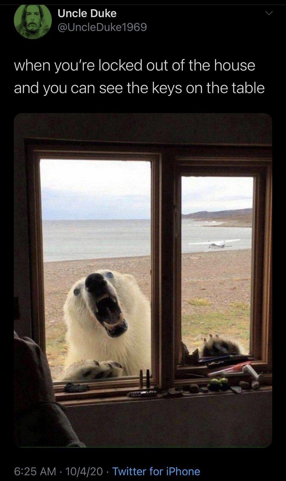 Morning Wake Up Call Fresh Animal Memes October 11th 2020 Animal Memes Wake Up Call Memes