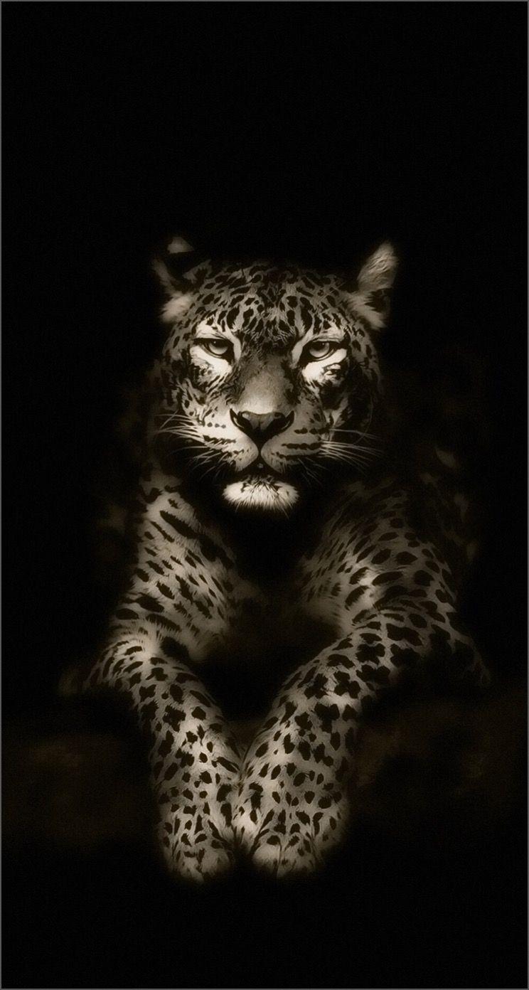 обои Iphone Wallpaper Jaguar Animals Animal Wallpaper Iphone