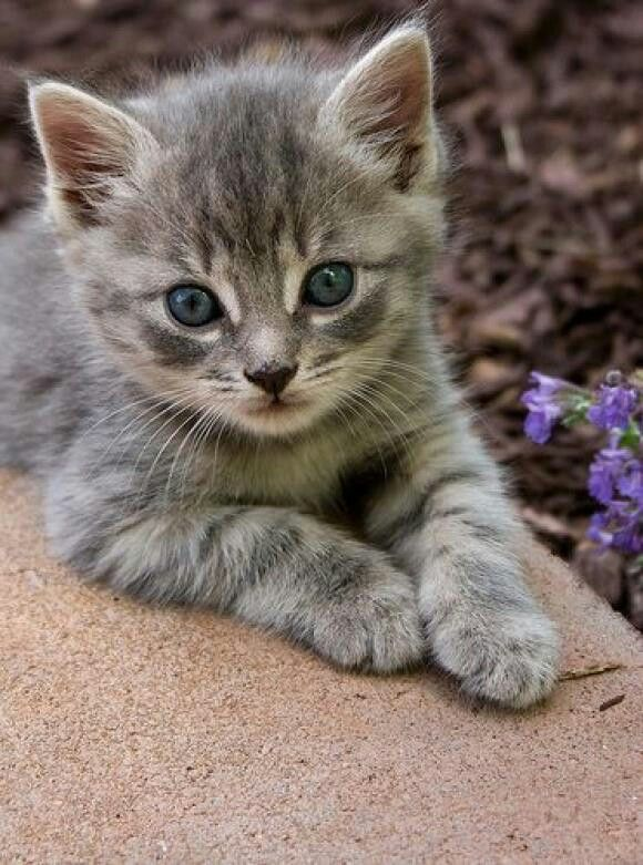 Blue Eyed Baby Cute Cats Kittens Cutest Beautiful Cats