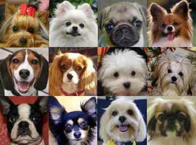 Breads With Photos Dog Breed Comparison App Chart Dog Breeds