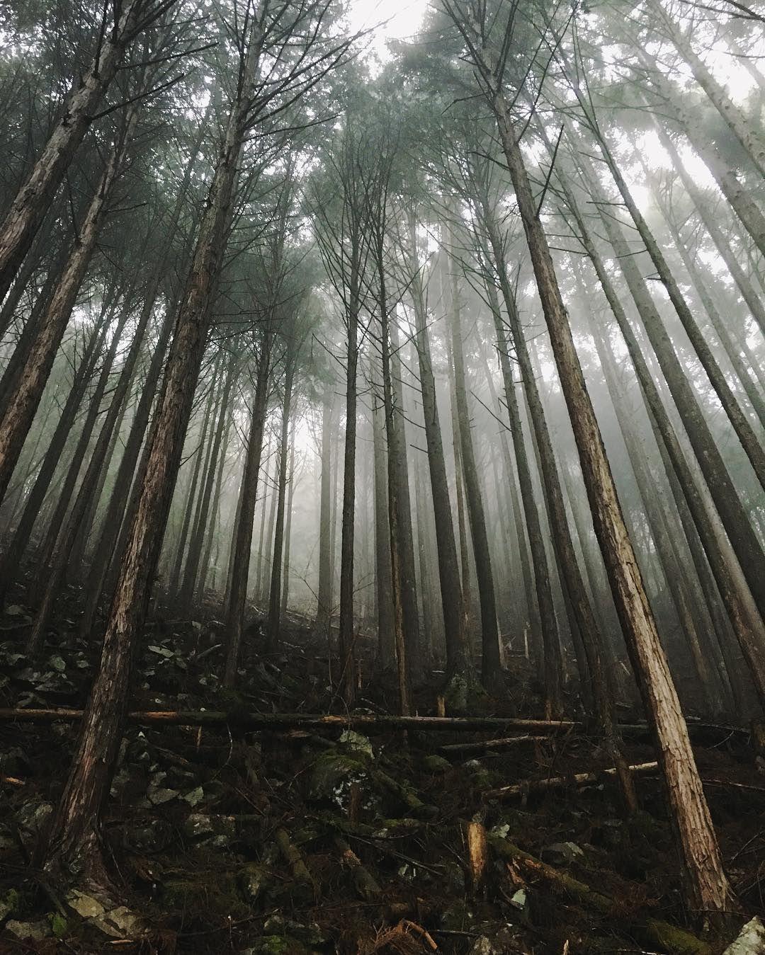 Mystical magical  #kumanokodo by danrubin
