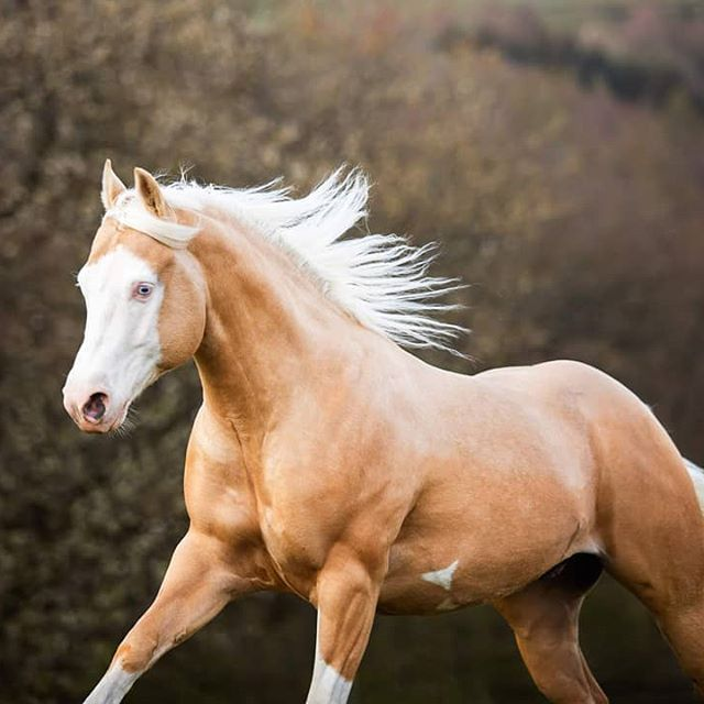 Anna Panke Photography On Instagram Digital Decluttering Oder Auch Ich Sage Tschuss Ja Ich V In 2020 Beautiful Horses Palomino Horse Pretty Horses