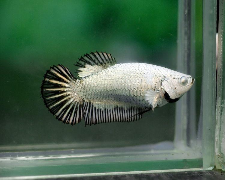 Flickr cool fish fish pet freshwater aquarium