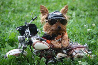 Biker Chic!