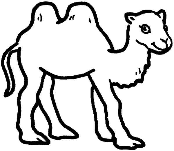 Pin On Bactria Camel Coloring Pages