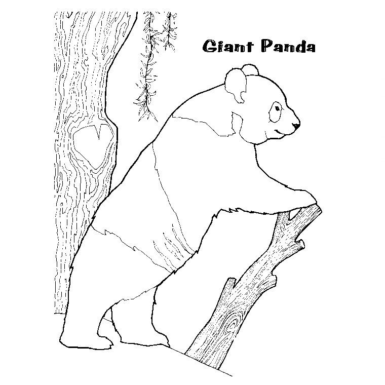 Coloriage Geant Animaux.Coloriage Panda Geant Pandi Panda Coloriage Panda