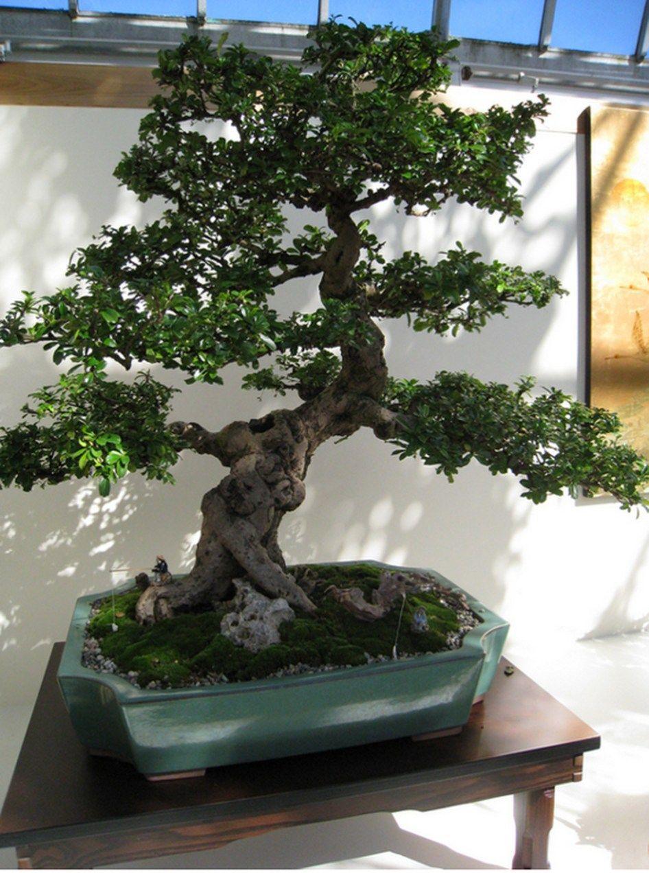 Very Attractive Bonsai Indoor Trees Ideas For Indoor